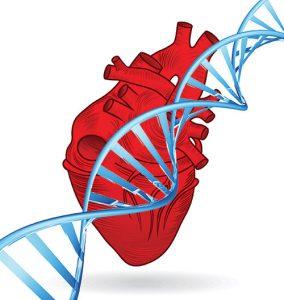 ارتباط ژنتیک و آریتمی قلبی