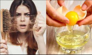 استفاده از تخم مرغ برای کاهش ریزش مو