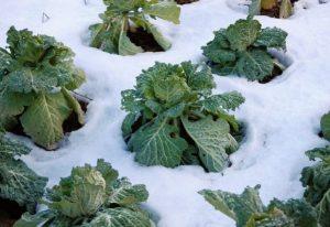 تنوع سبزیجات زمستانی